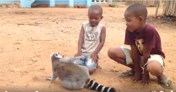 Lemur-pide-carino2