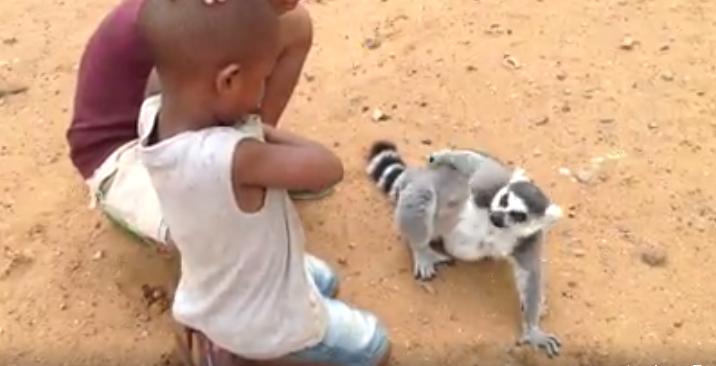 Lemur-pide-carino4