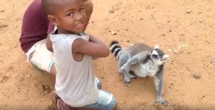 Lemur-pide-carino5