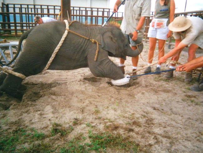 Maltrato-elefante-bebe