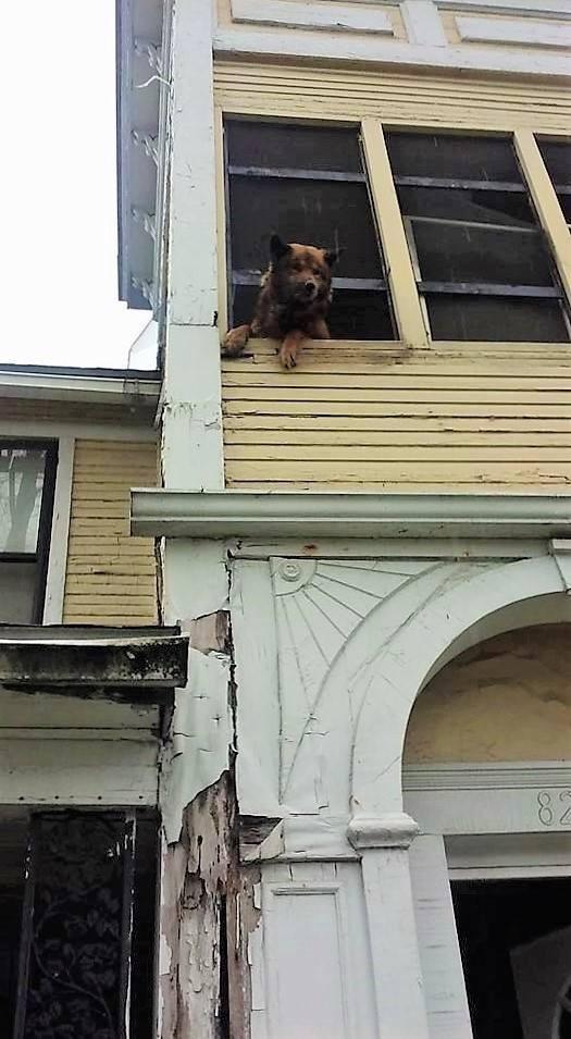 Perro atrapado en un portico 1