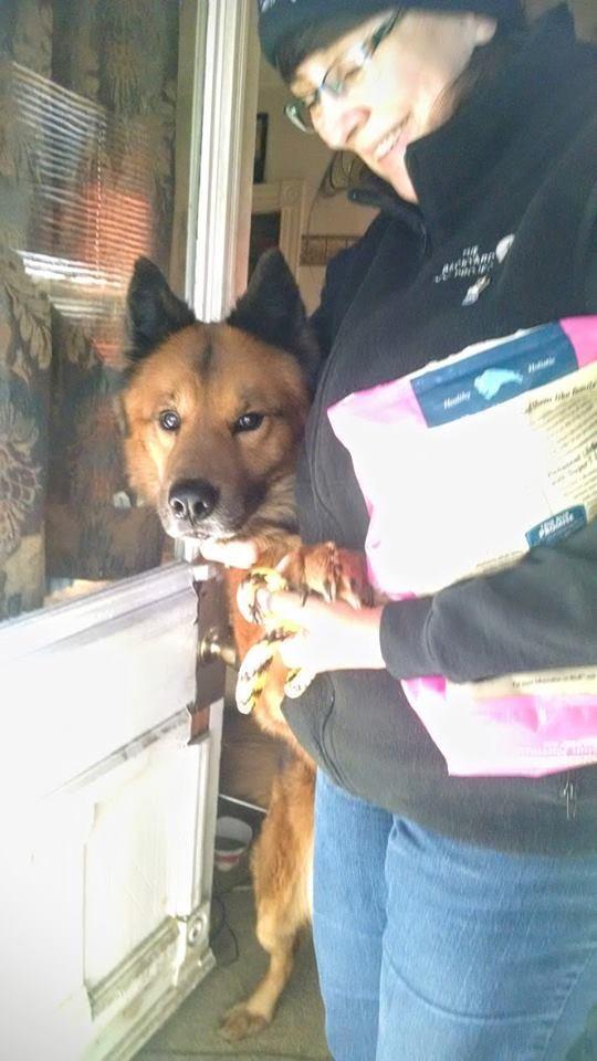 Perro atrapado en un portico 4