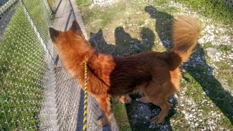 Perro atrapado en un portico 6