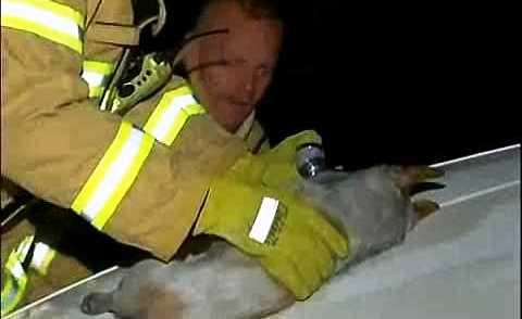 Perro ayuda a salvar a 4 gatitos 17