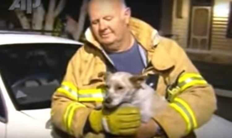 Perro ayuda a salvar a 4 gatitos 22