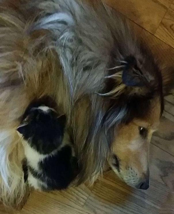 Perro-gato-duermen-juntos 1