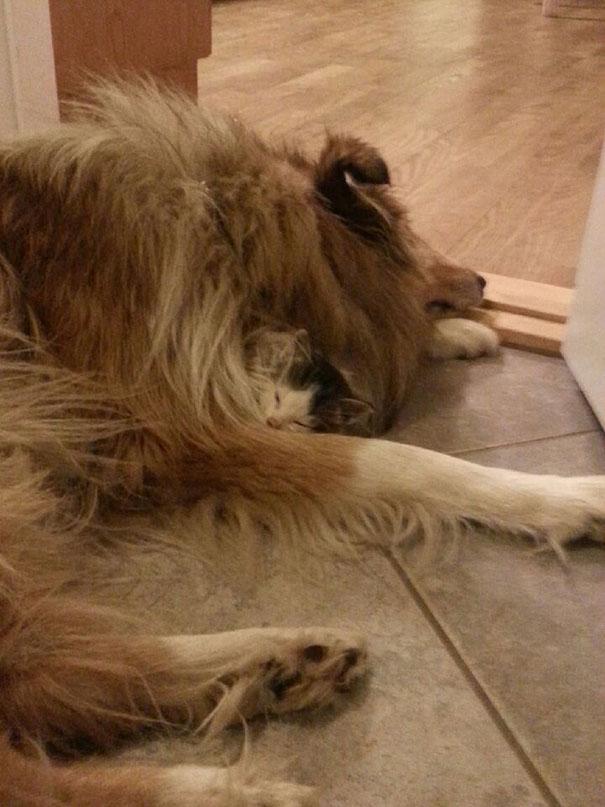 Perro-gato-duermen-juntos 2