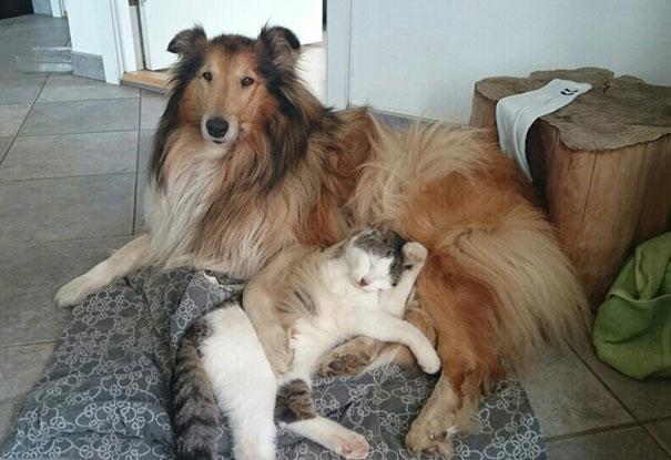 Perro-gato-duermen-juntos 3