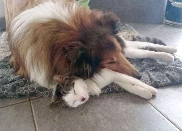 Perro-gato-duermen-juntos 4