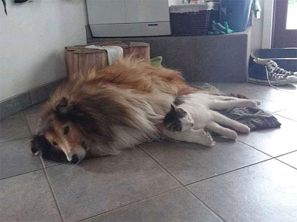 Perro-gato-duermen-juntos 6