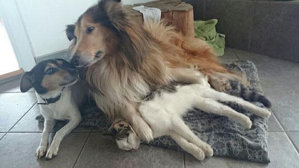 Perro-gato-duermen-juntos 7