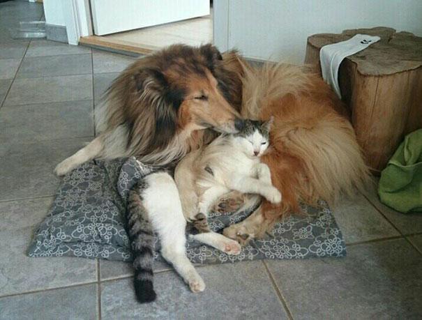 Perro-gato-duermen-juntos 8