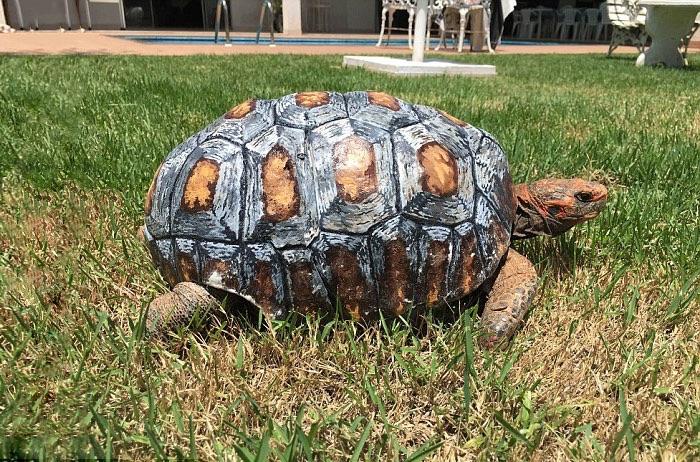 Tortuga-caparazon-3D 5