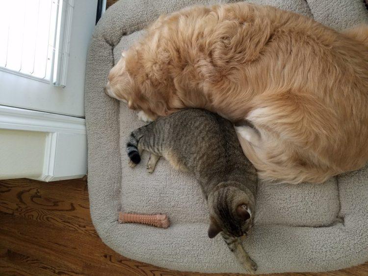 Tucker y Sokka amigos inseparables