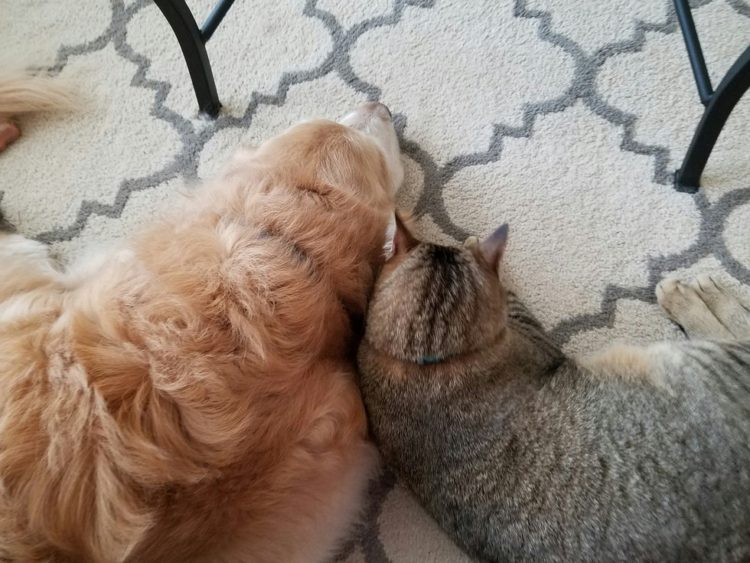 Tucker y Sokka en el piso