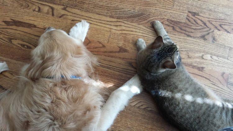 Tucker y Sokka junto en el suelo