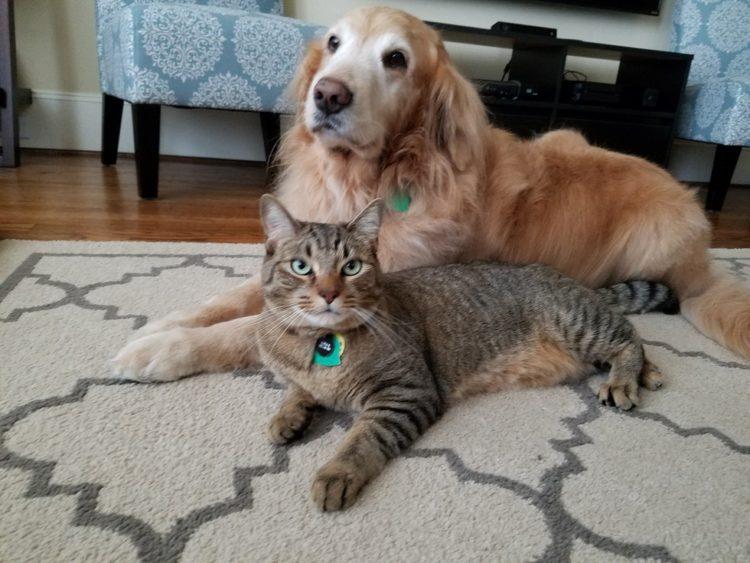 Tucker y Sokka los amigos