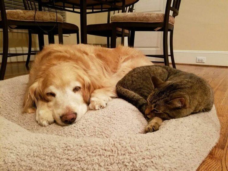 Tucker y Sokka reconfortándose
