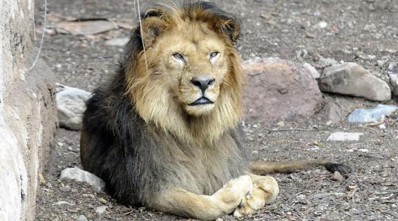 Zoo-Mendoza-crisis 5