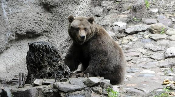 Zoo-Mendoza-crisis 6