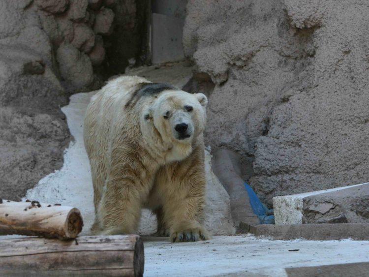 Zoo-Mendoza-crisis-Oso-Arturo