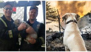 animales-afectados-incendio