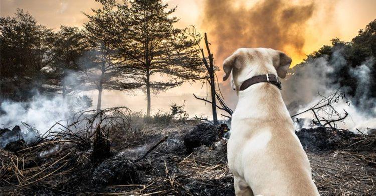 animales-afectados-incendio1