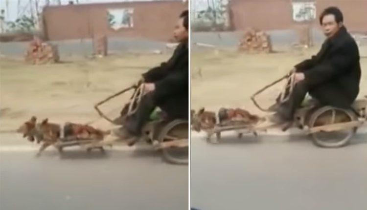 ata-a-perros-a-un-carrito-para-que-lo-trasladen