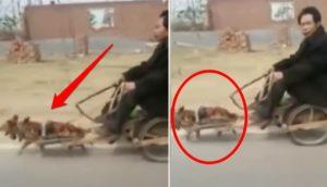 ata-a-perros-a-un-carrito-para-que-lo-trasladen - copia