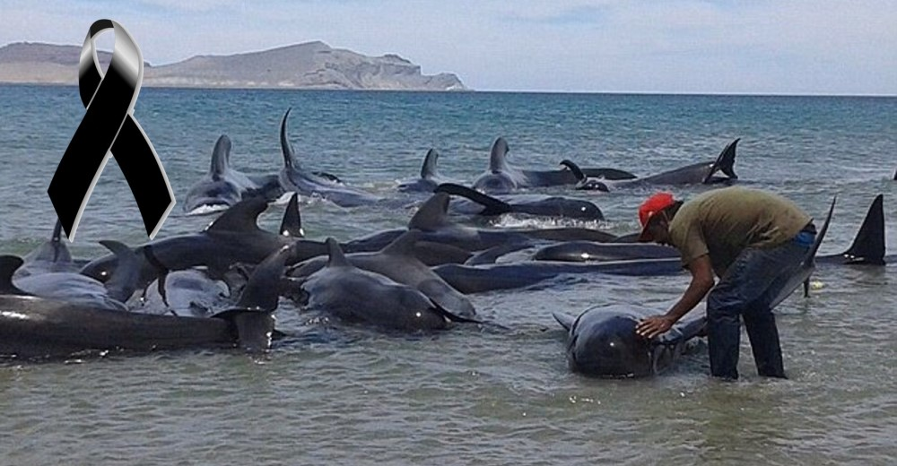 ballenas-mueren-en-playa-de-mexico2 - copia
