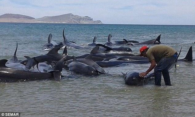 ballenas-mueren-en-playa-de-mexico2