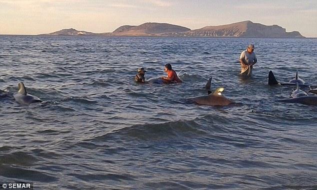 ballenas-mueren-en-playa-de-mexico3