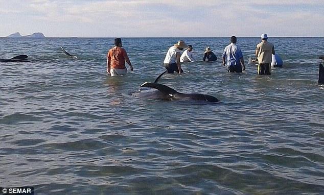 ballenas-mueren-en-playa-de-mexico4