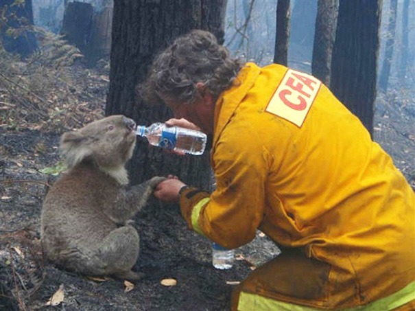 bomberos-rescatan-animales1
