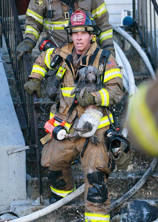 bomberos-rescatan-animales10