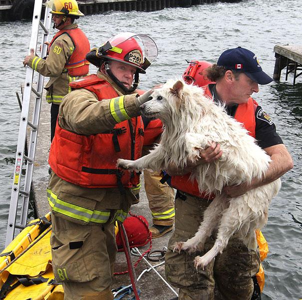 bomberos-rescatan-animales11