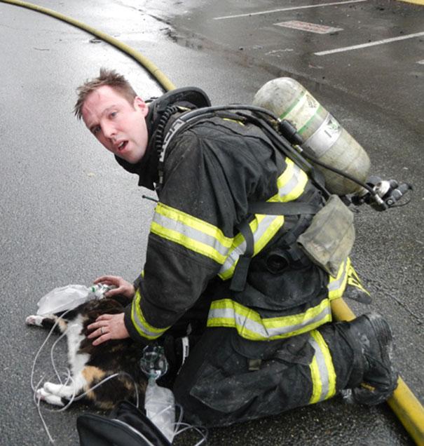 bomberos-rescatan-animales14