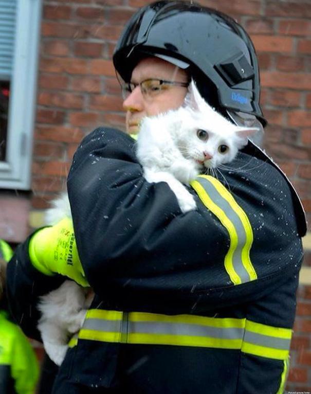 bomberos-rescatan-animales2