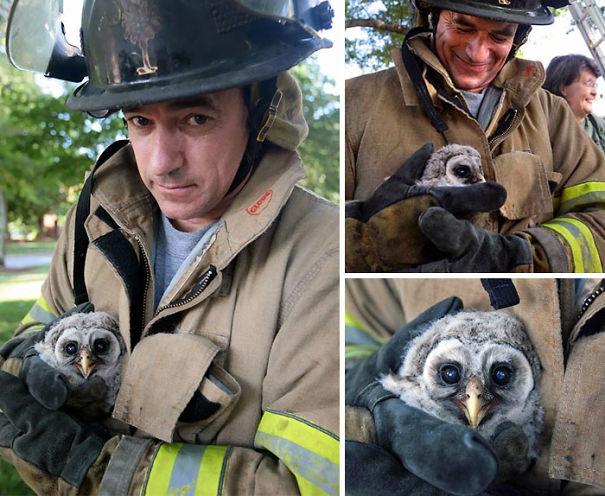 bomberos-rescatan-animales3