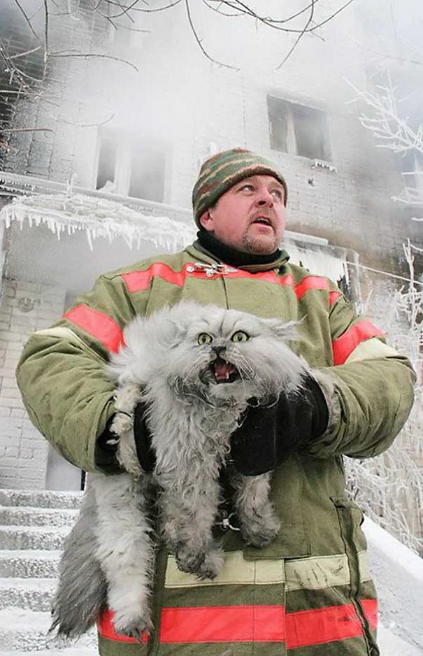 bomberos-rescatan-animales4