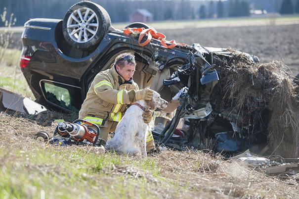 bomberos-rescatan-animales5