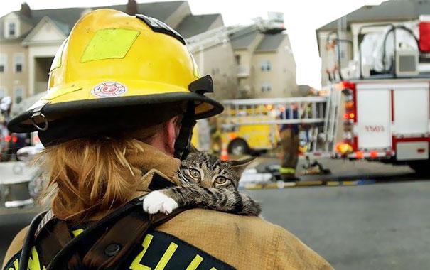 bomberos-rescatan-animales6