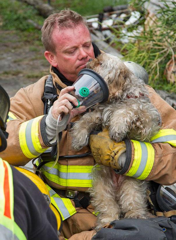 bomberos-rescatan-animales7