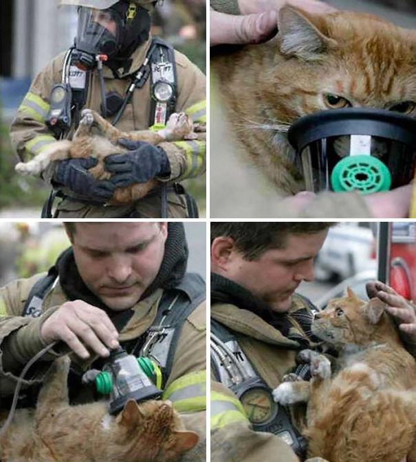 bomberos-rescatan-animales9