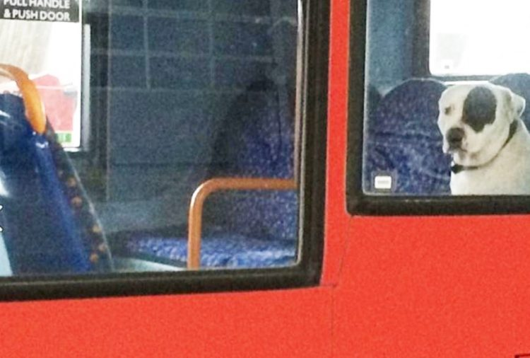 boston-perdido-autobus5