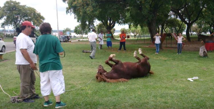 caballo-esclavo-liberado