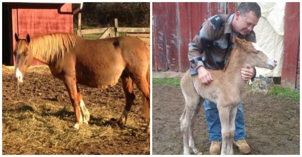 caballo-rechazado-mama-adoptiva