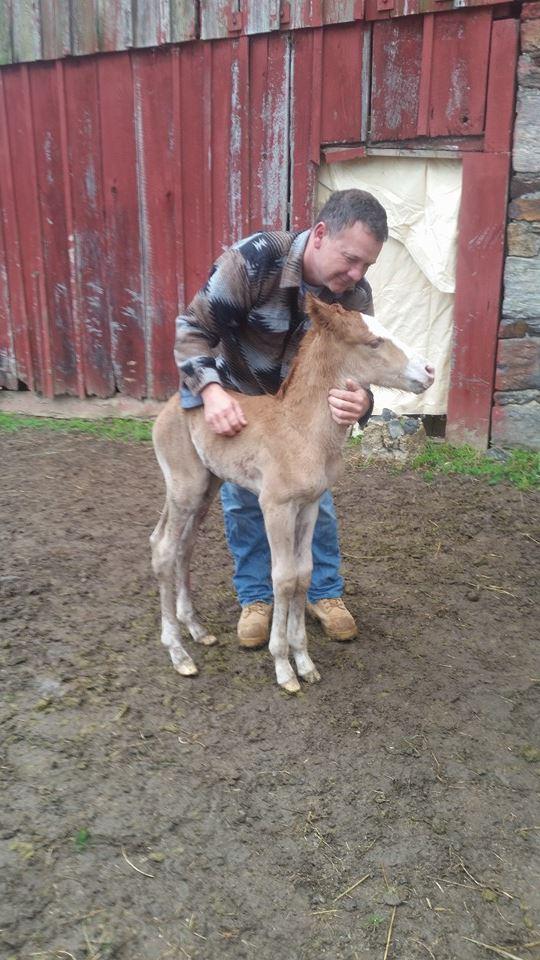 caballo-rechazado-mama-adoptiva2
