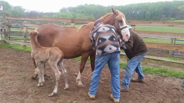 caballo-rechazado-mama-adoptiva3