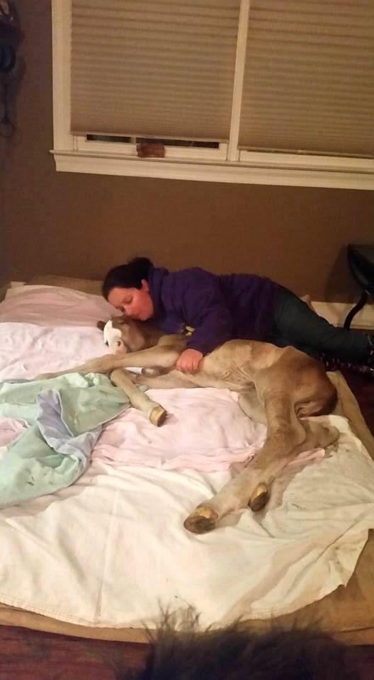 caballo-rechazado-mama-adoptiva4